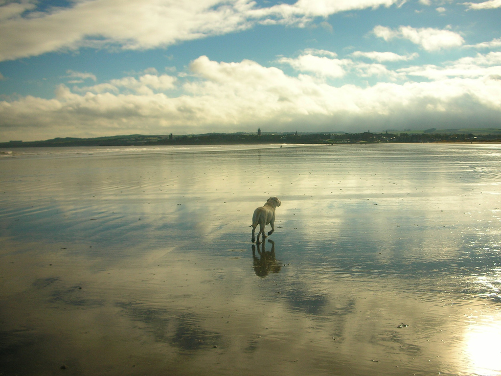 Man's best friend on the West Sands